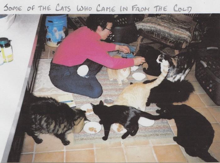 Judy Hedges - cats 700x