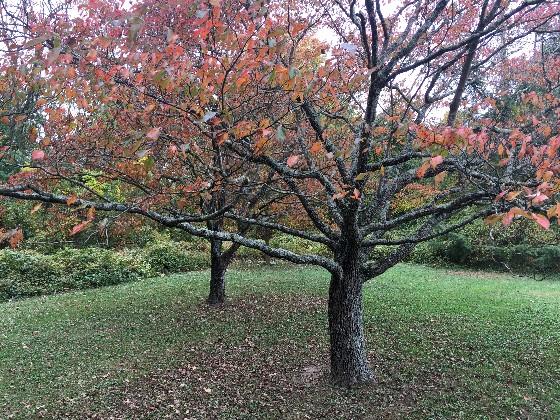 uufe trees